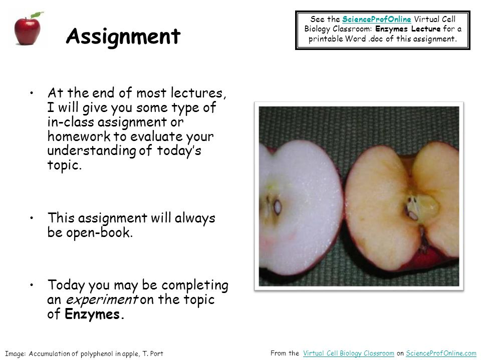 See the ScienceProfOnline Virtual Cell Biology Classroom: Enzymes Lecture for a printable Word .doc of this assignment.