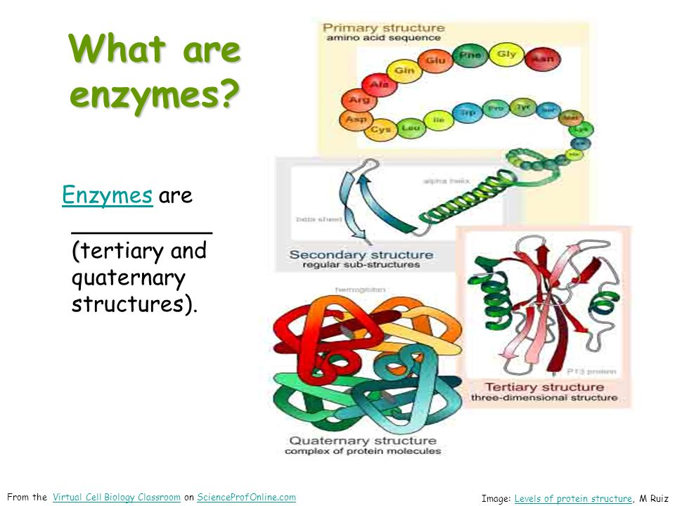 What are enzymes Enzymes are __________ (tertiary and quaternary structures). proteins.