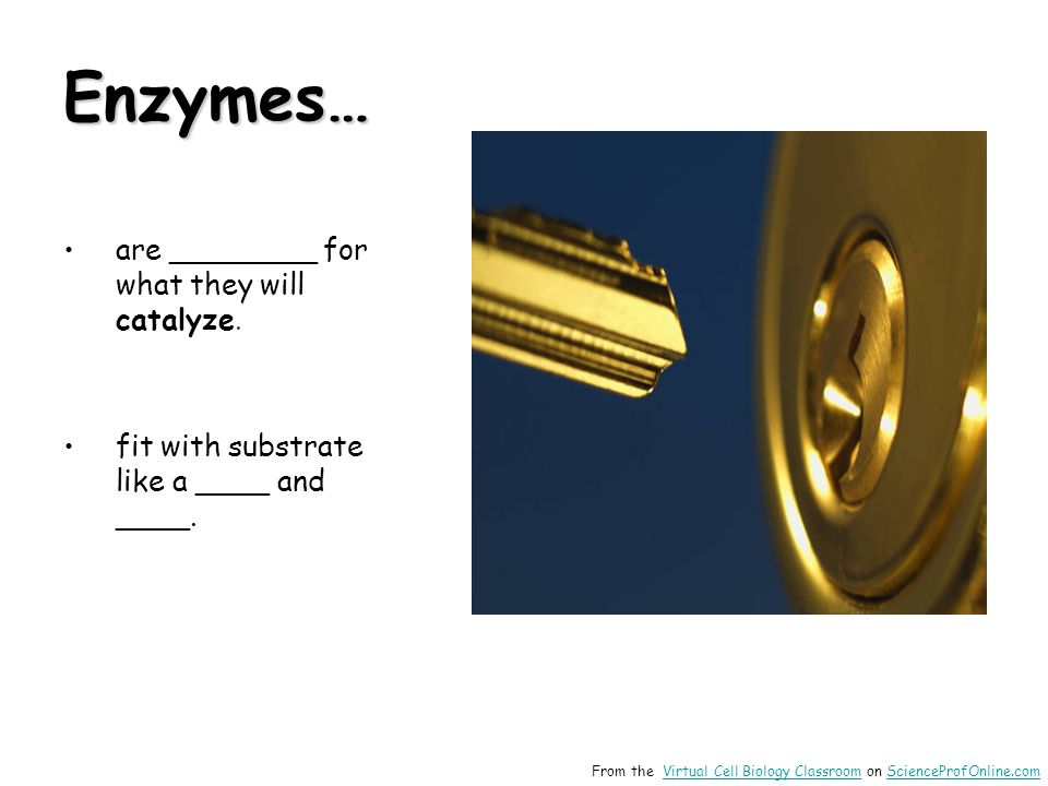 Enzymes… are ________ for what they will catalyze.