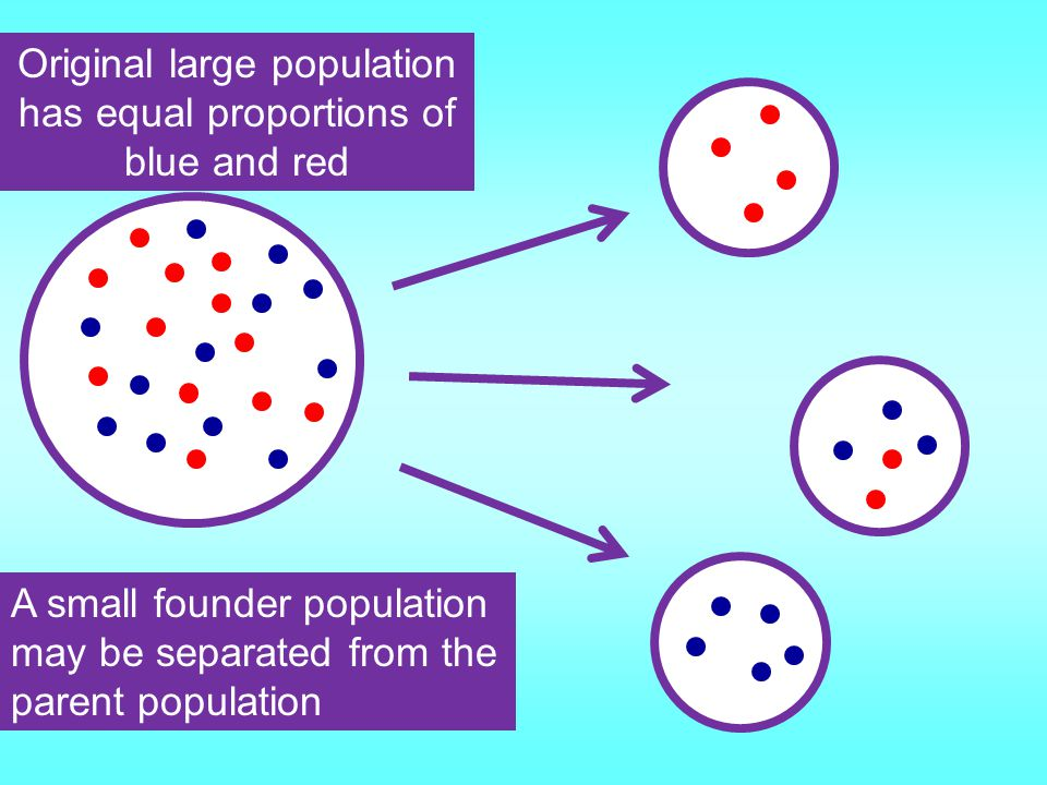 Original large population has equal proportions of blue and red