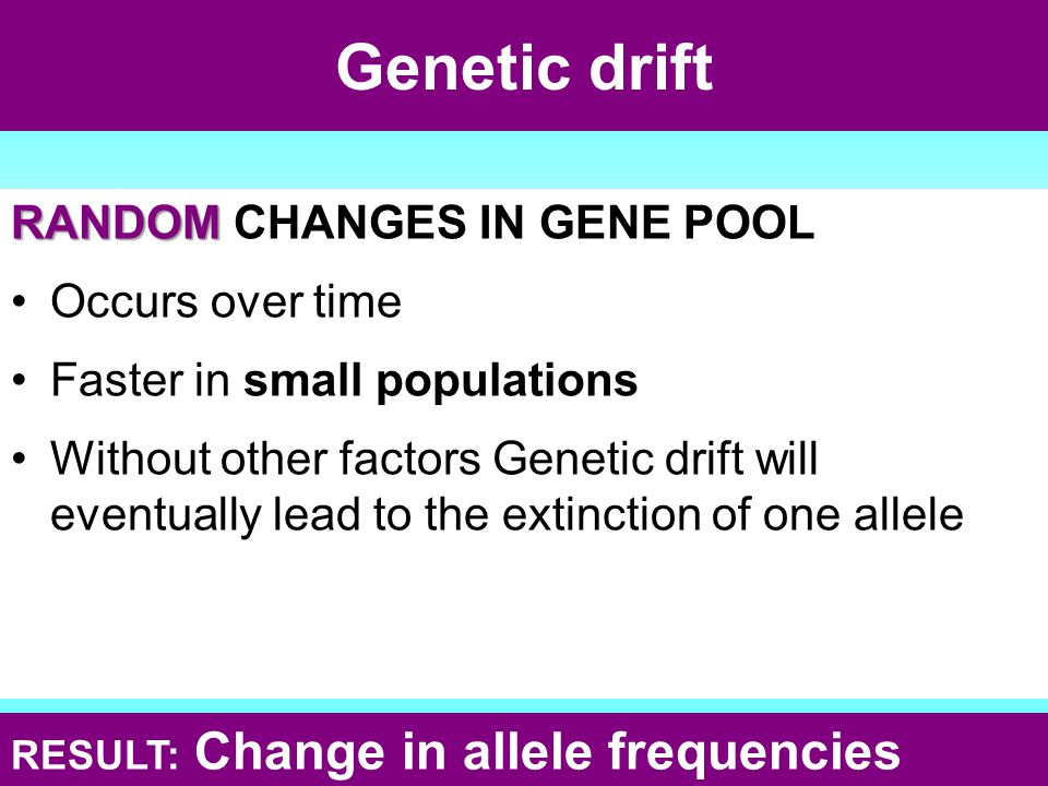 Genetic drift RANDOM CHANGES IN GENE POOL Occurs over time