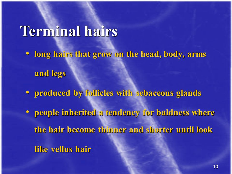 Terminal hairs long hairs that grow on the head, body, arms and legs
