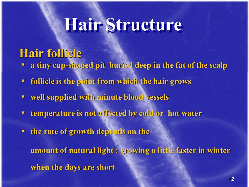 Hair Structure Hair follicle