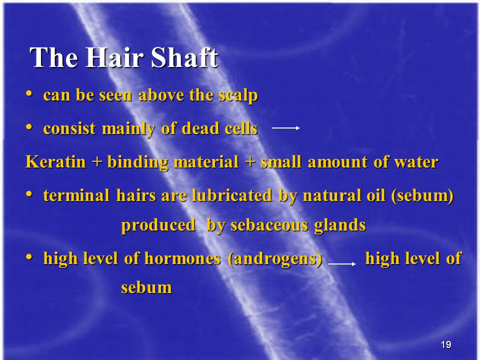 The Hair Shaft can be seen above the scalp