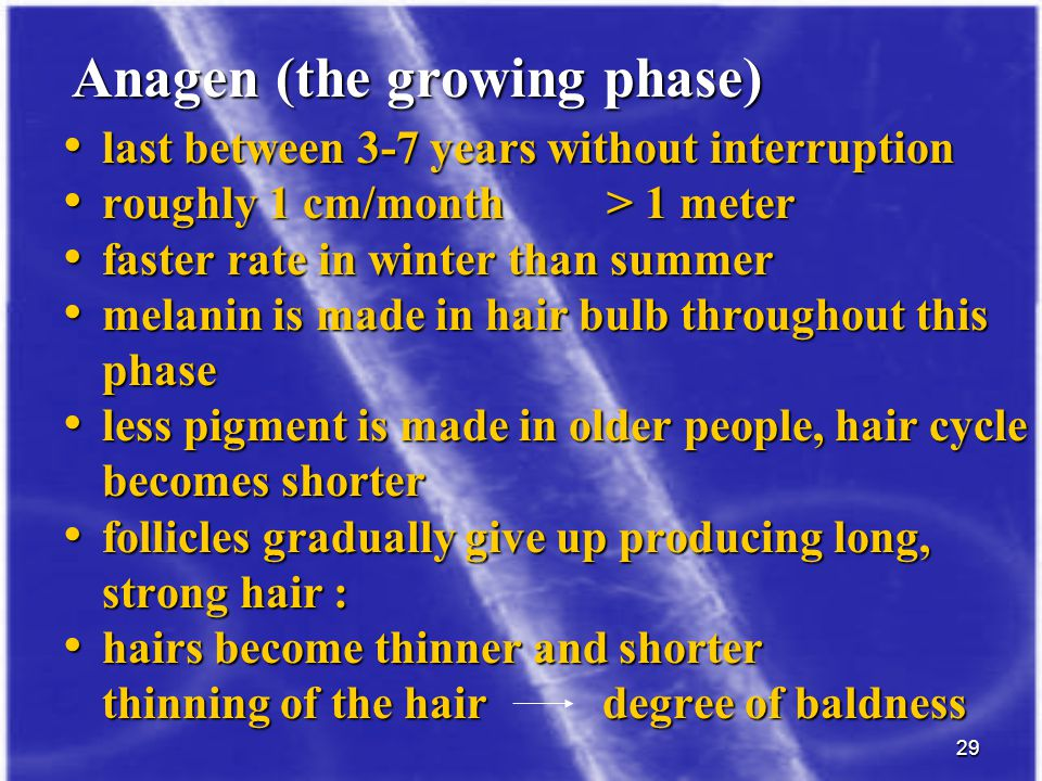 Anagen (the growing phase)