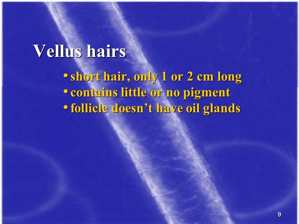Vellus hairs short hair, only 1 or 2 cm long