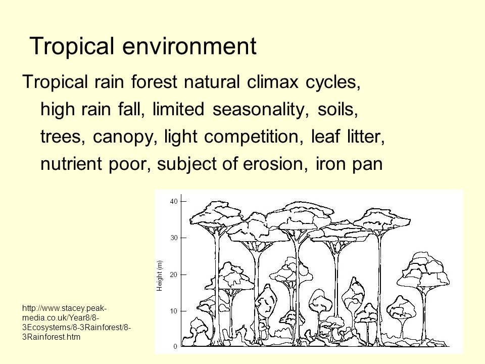 Tropical environment Tropical rain forest natural climax cycles,