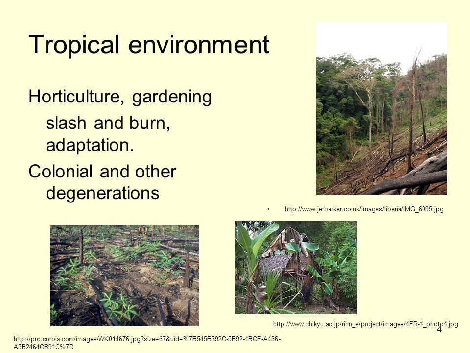 Tropical environment Horticulture, gardening