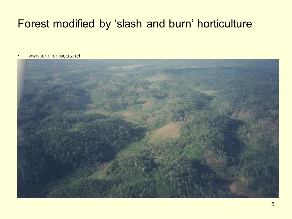 Forest modified by 'slash and burn' horticulture