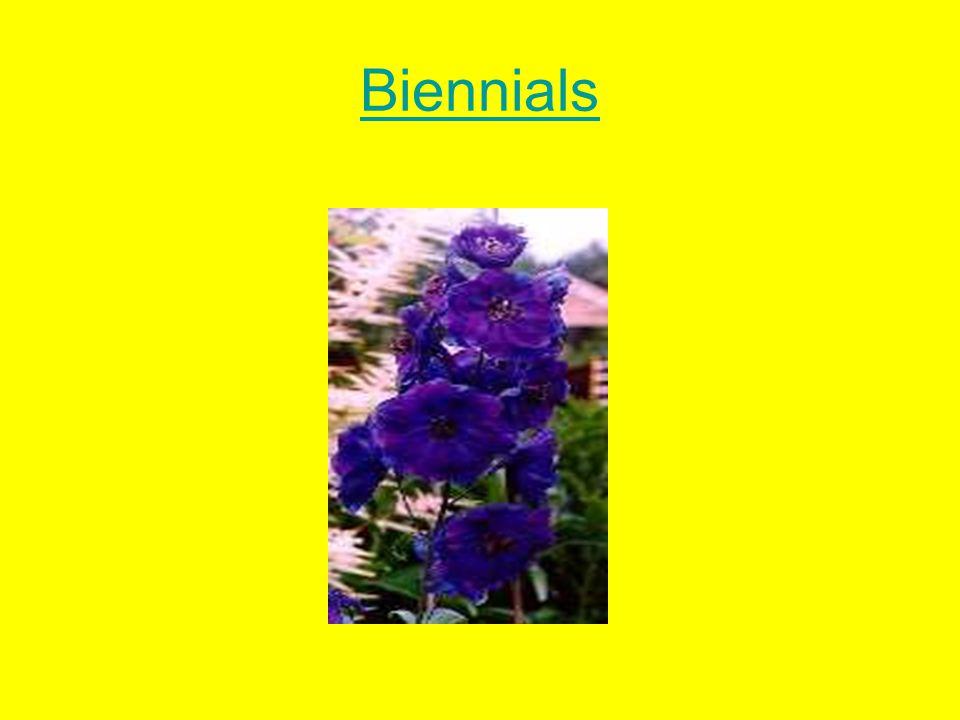 Biennials