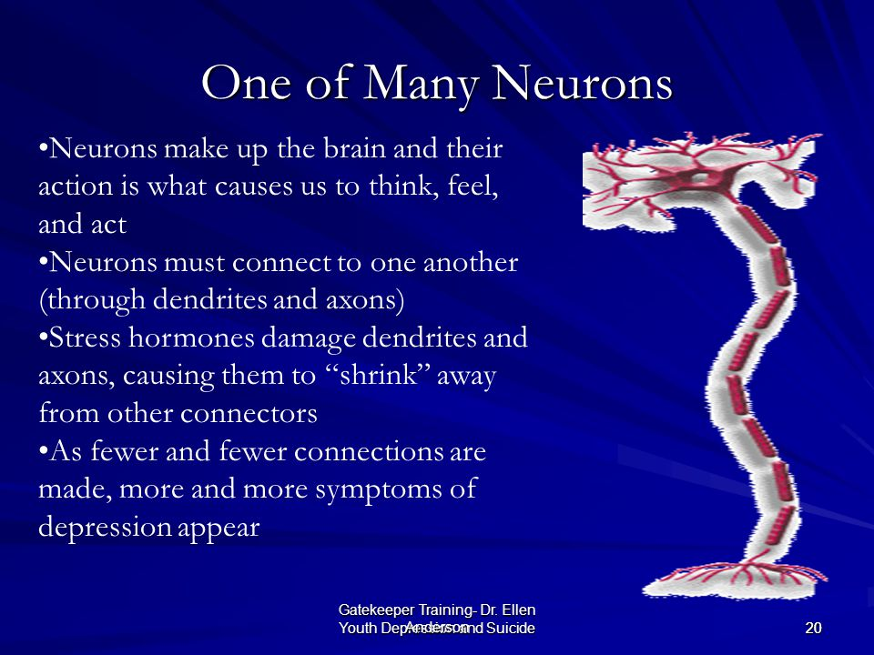 One of Many Neurons Neurons make up the brain and their action is what causes us to think, feel, and act.