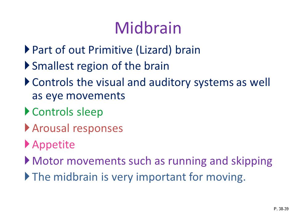 Midbrain Part of out Primitive (Lizard) brain