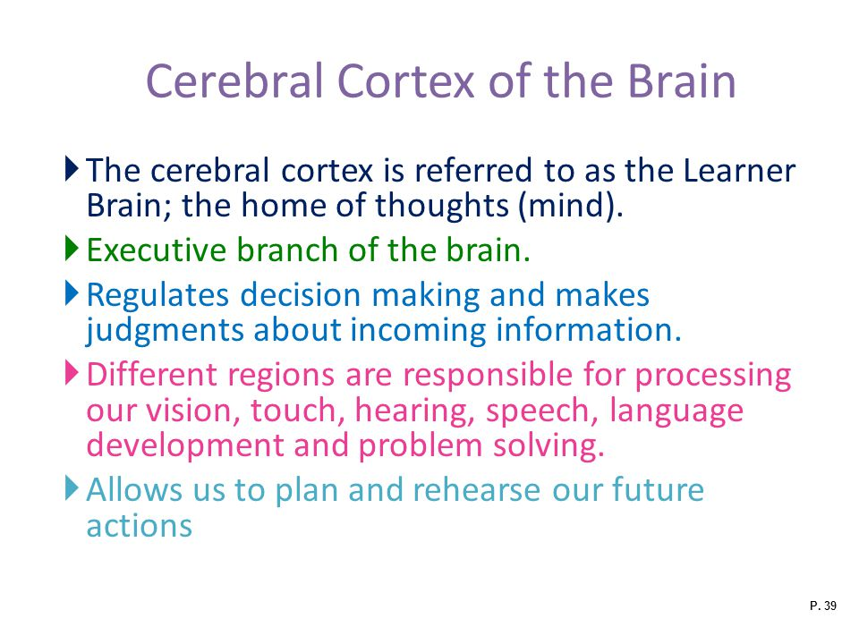 Cerebral Cortex of the Brain
