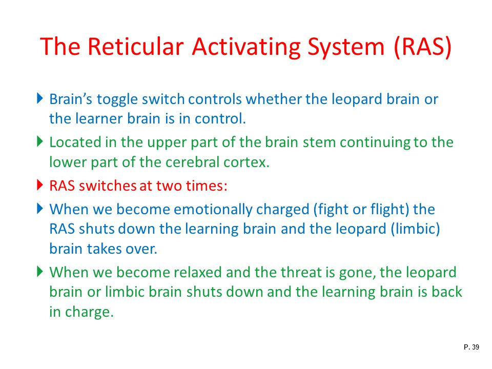 The Reticular Activating System (RAS)