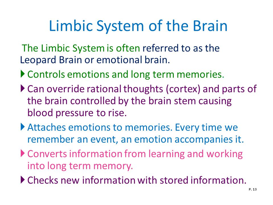 Limbic System of the Brain