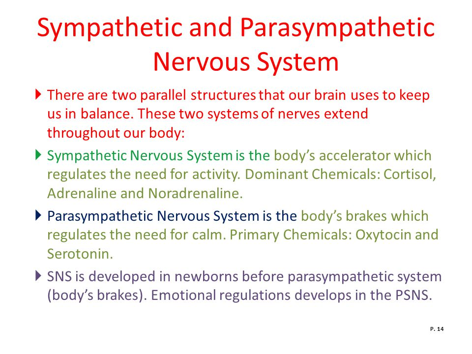 Sympathetic and Parasympathetic Nervous System