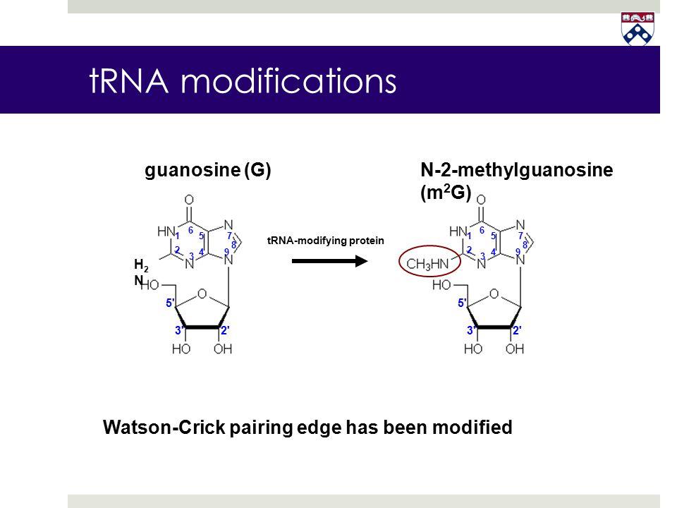 tRNA modifications guanosine (G) N-2-methylguanosine (m2G)