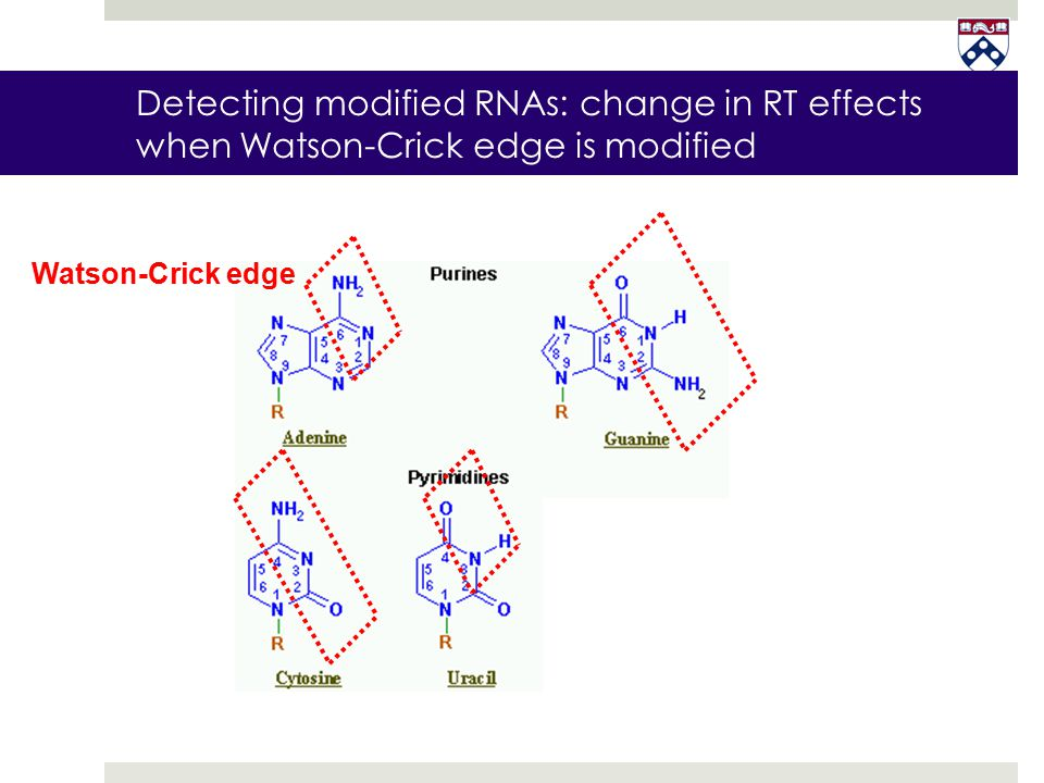 Detecting modified RNAs: change in RT effects when Watson-Crick edge is modified