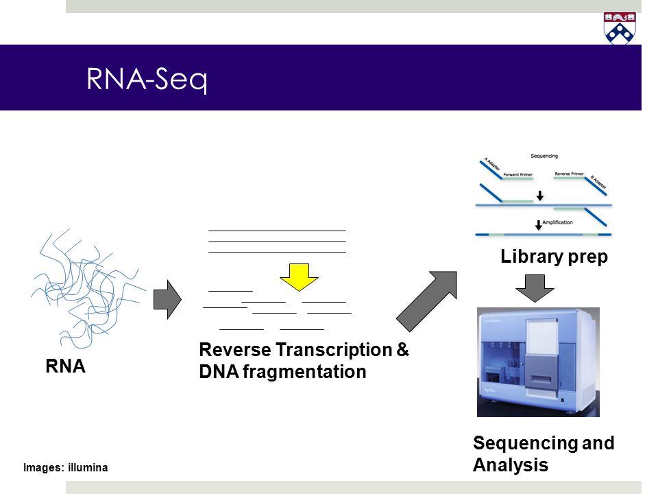 RNA-Seq Library prep Reverse Transcription & DNA fragmentation RNA