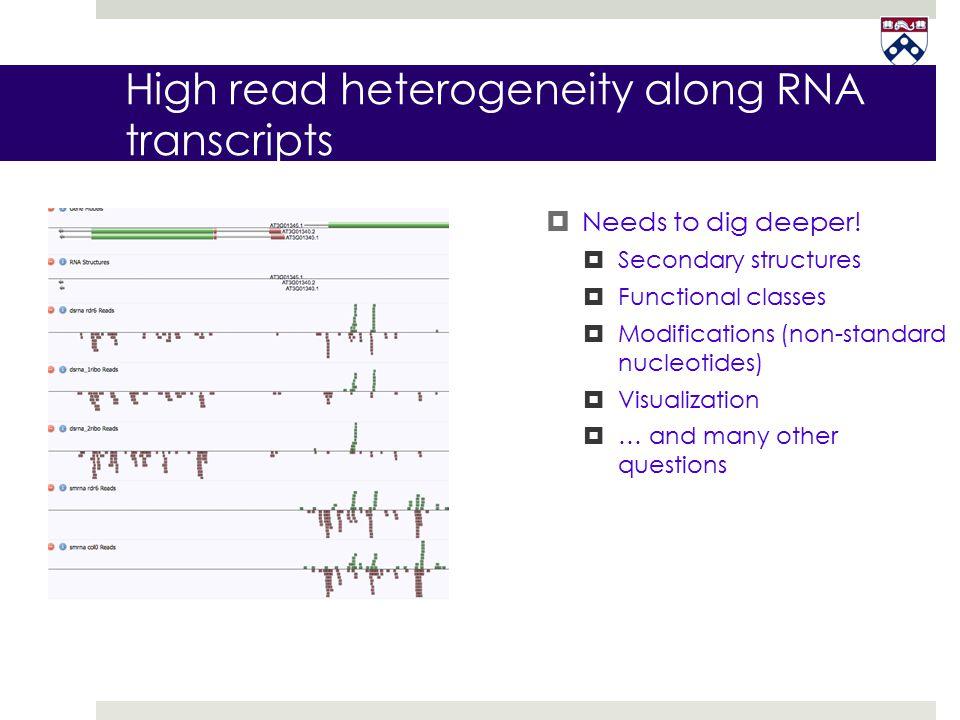 High read heterogeneity along RNA transcripts