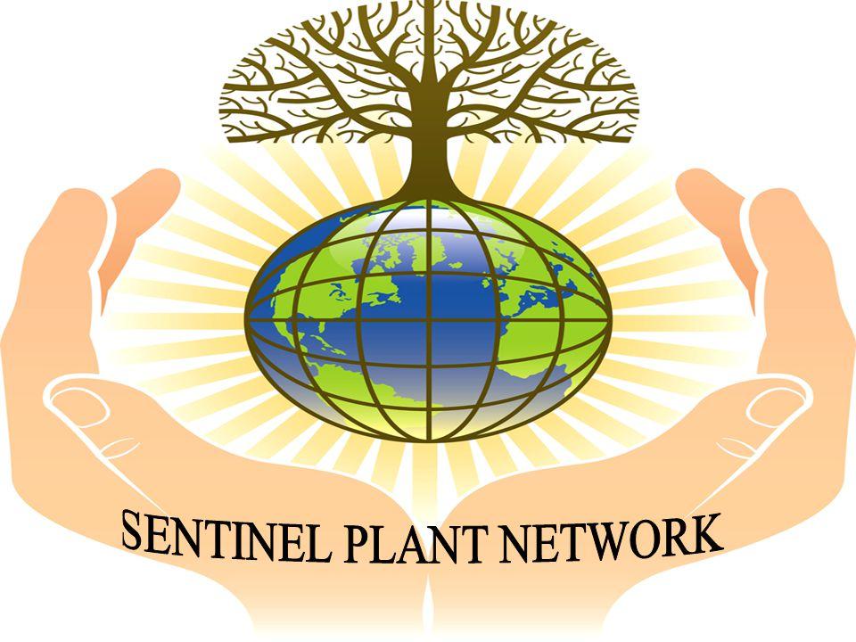 SENTINEL PLANT NETWORK