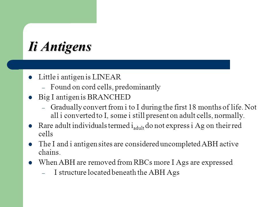 Ii Antigens Little i antigen is LINEAR