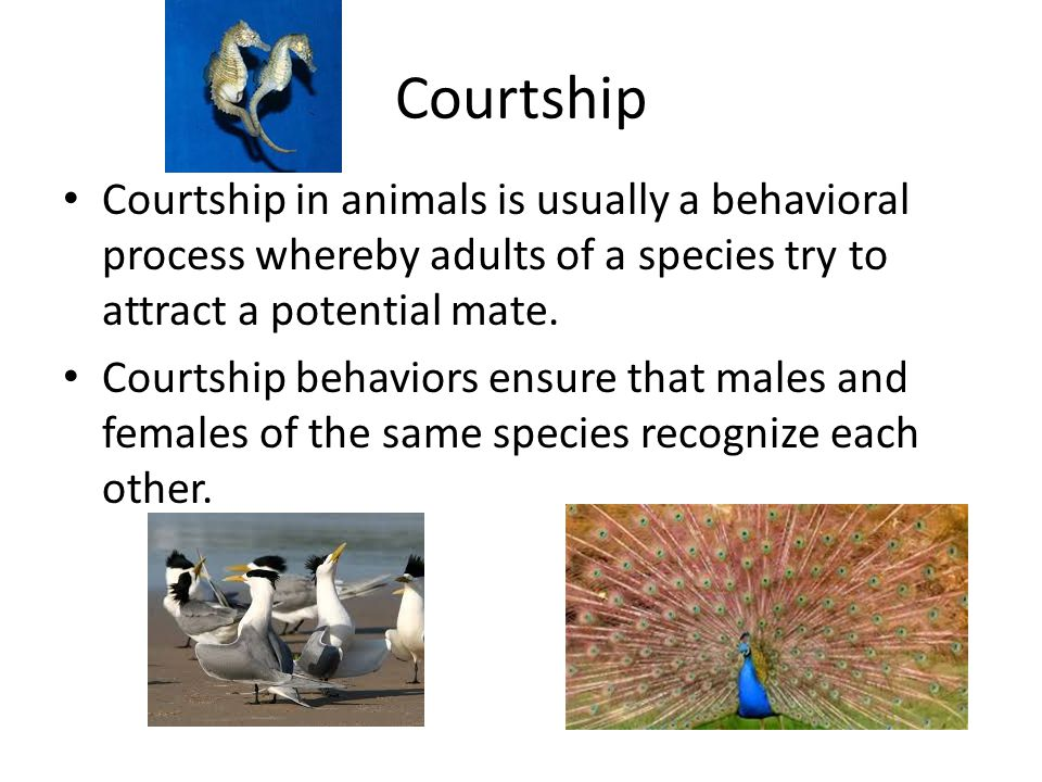 Courtship Courtship in animals is usually a behavioral process whereby adults of a species try to attract a potential mate.