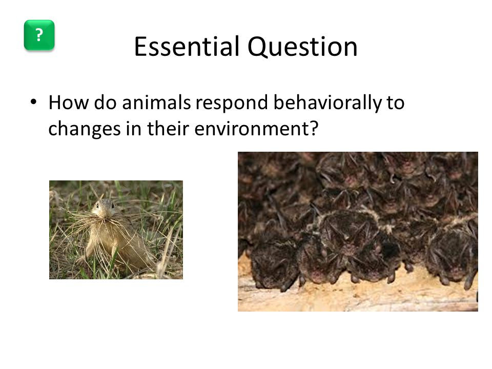 Essential Question How do animals respond behaviorally to changes in their environment
