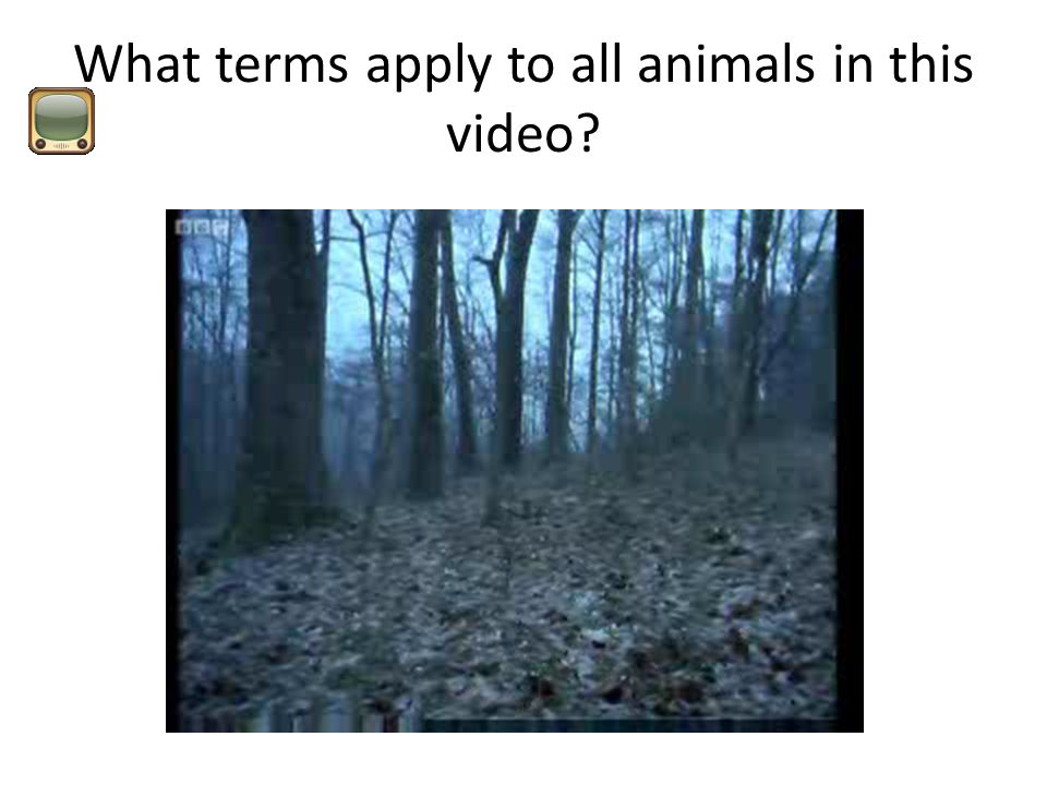 What terms apply to all animals in this video