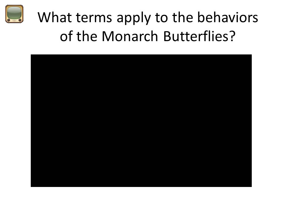 What terms apply to the behaviors of the Monarch Butterflies