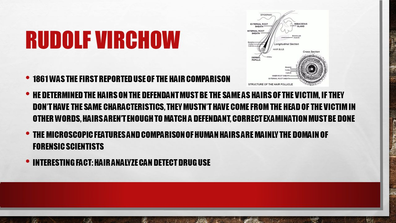 Rudolf Virchow 1861 was the first reported use of the hair comparison