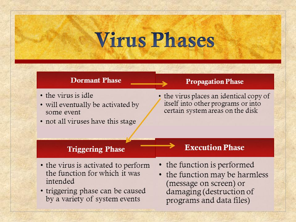 Virus Phases Execution Phase the function is performed