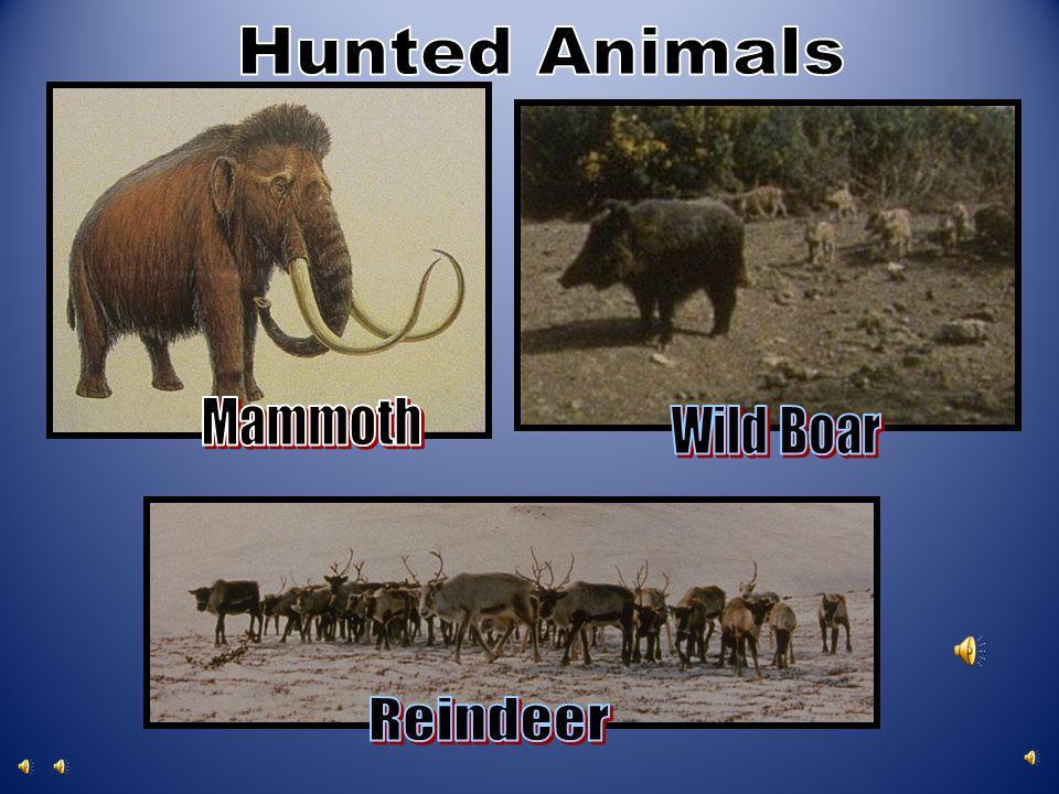 Hunted Animals Mammoth Wild Boar Reindeer