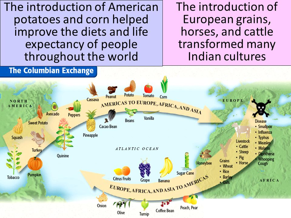 The introduction of American potatoes and corn helped improve the diets and life expectancy of people throughout the world