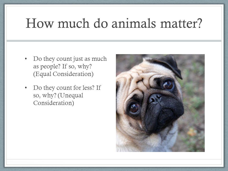 How much do animals matter