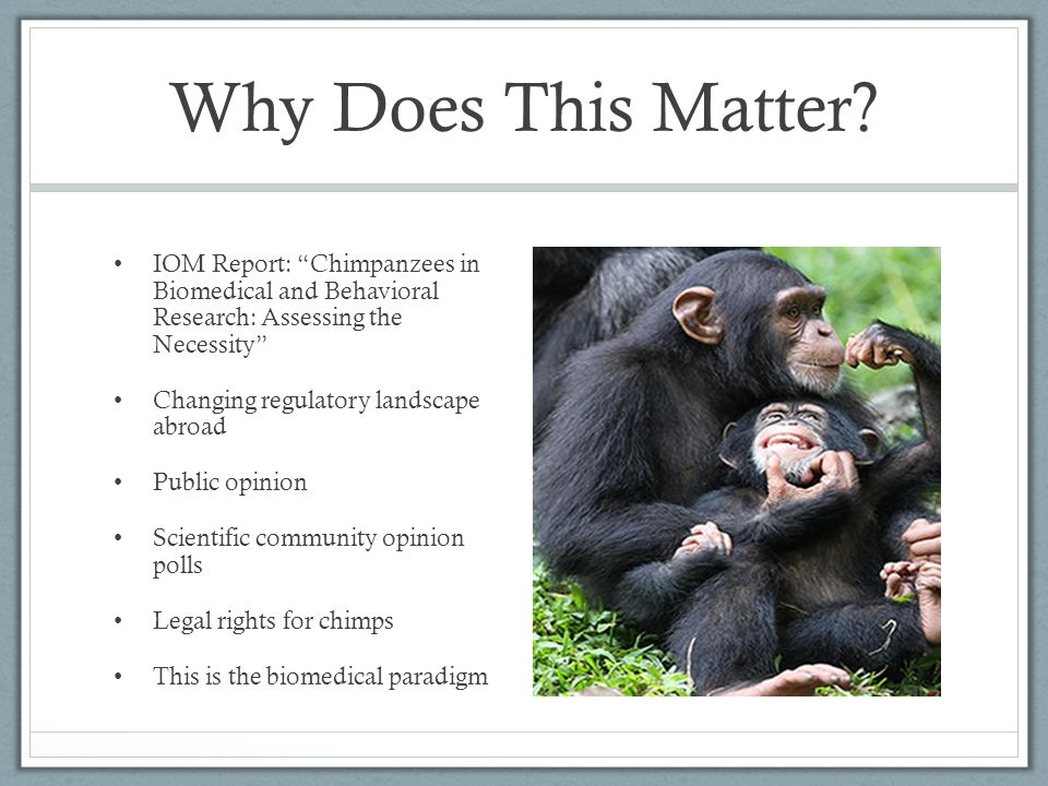 Why Does This Matter IOM Report: Chimpanzees in Biomedical and Behavioral Research: Assessing the Necessity
