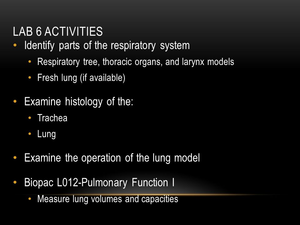 Lab 6 Activities Identify parts of the respiratory system