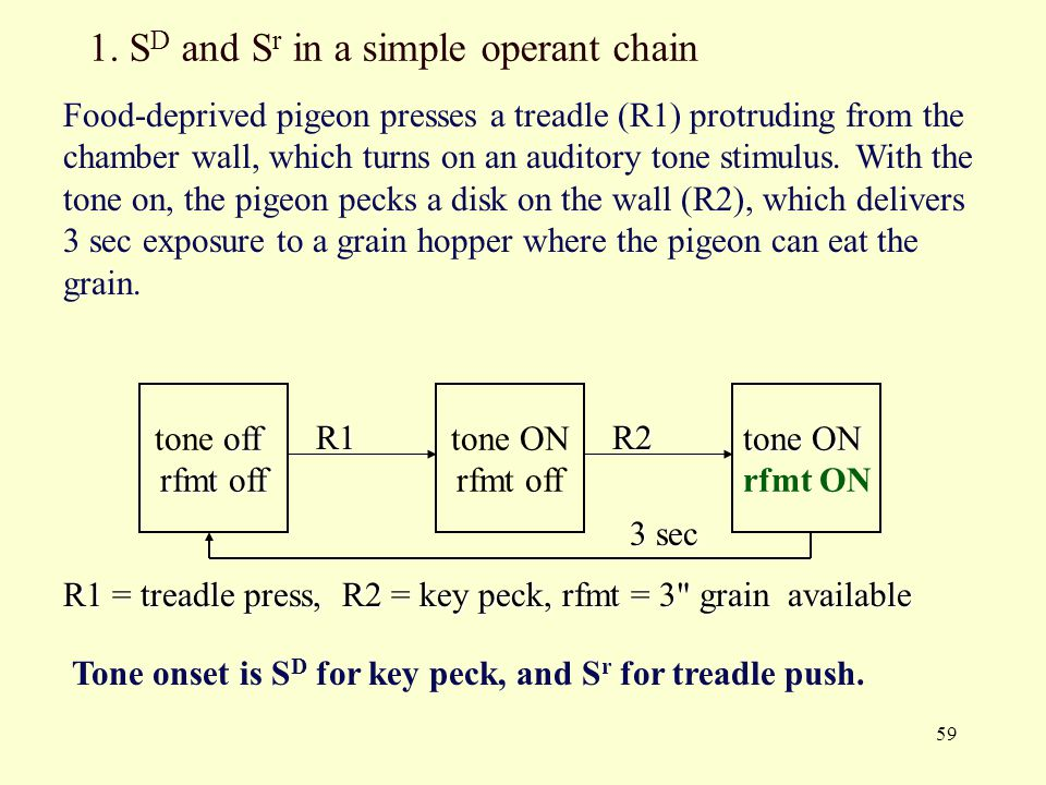 1. SD and Sr in a simple operant chain