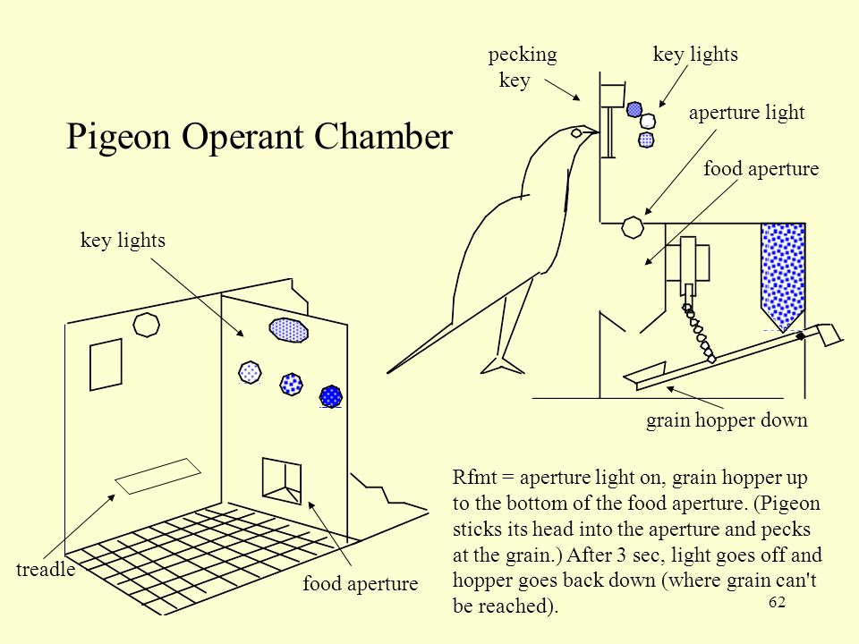 Pigeon Operant Chamber