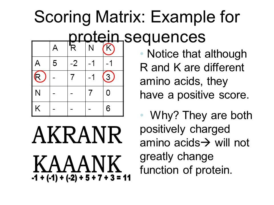 Scoring Matrix: Example for protein sequences