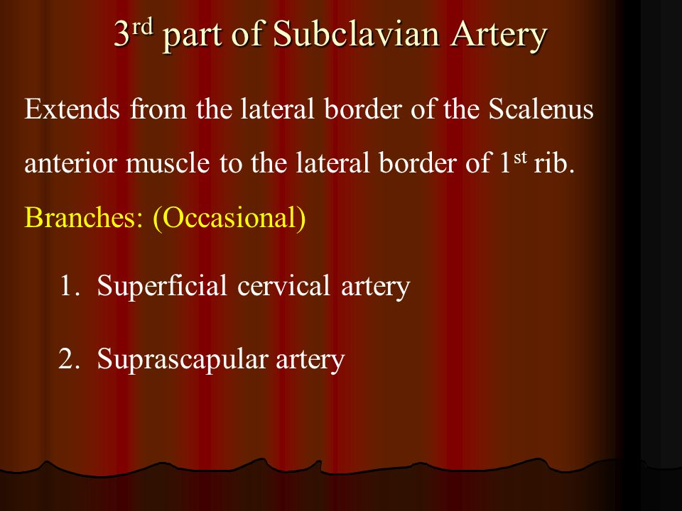 3rd part of Subclavian Artery