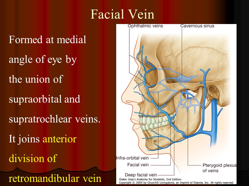 Facial Vein Formed at medial angle of eye by