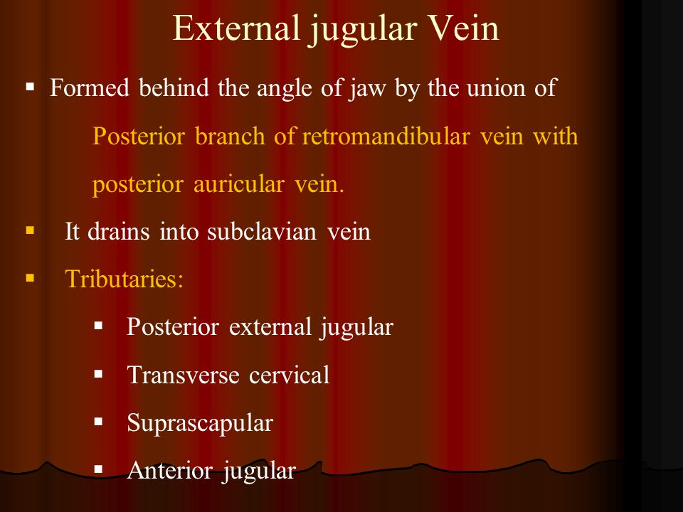 External jugular Vein Formed behind the angle of jaw by the union of
