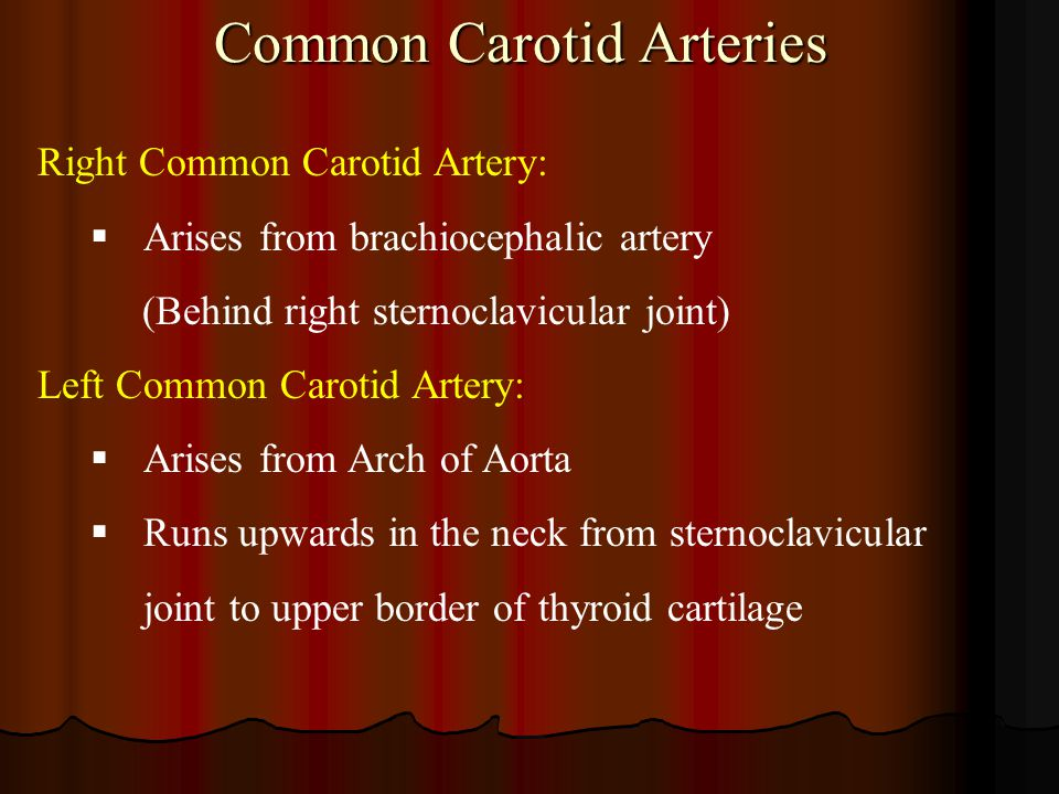 Common Carotid Arteries