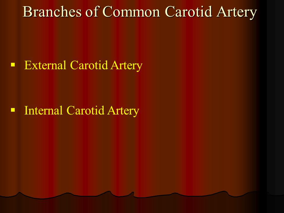 Branches of Common Carotid Artery