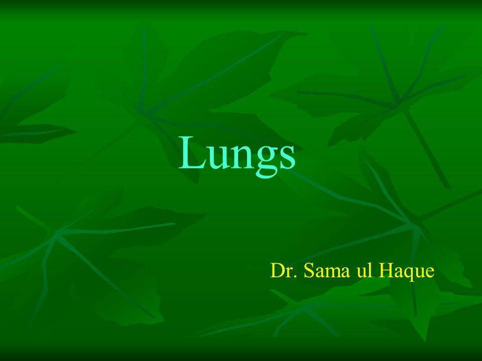 Lungs Dr. Sama ul Haque
