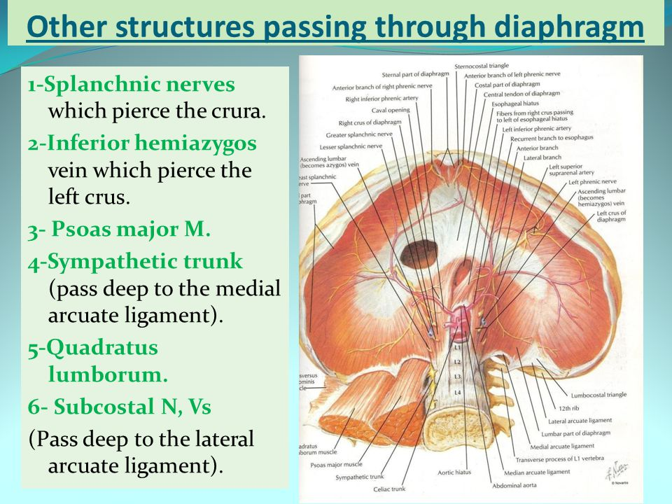 Other structures passing through diaphragm