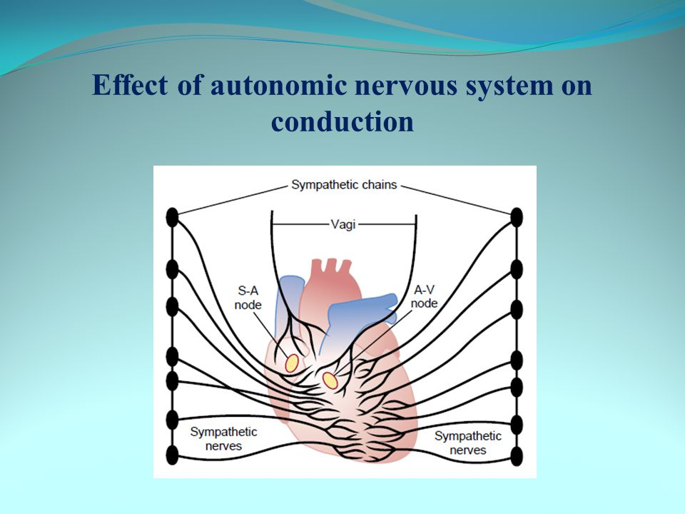 Effect of autonomic nervous system on conduction