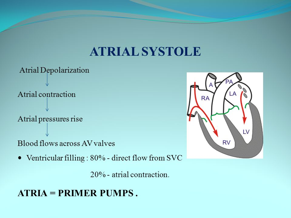 ATRIAL SYSTOLE ATRIA = PRIMER PUMPS . Atrial contraction