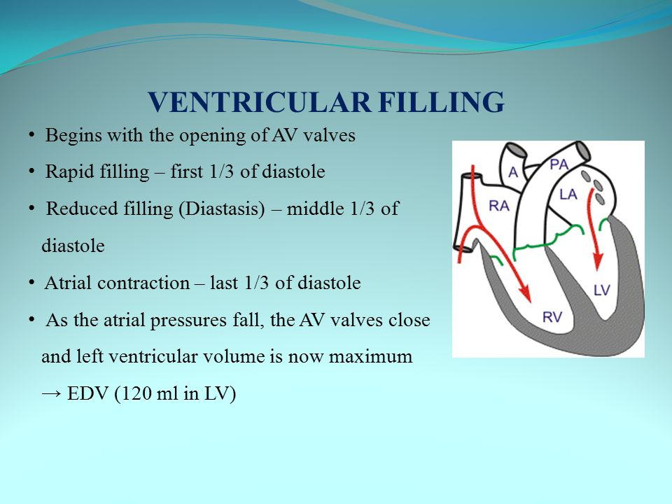 VENTRICULAR FILLING Begins with the opening of AV valves